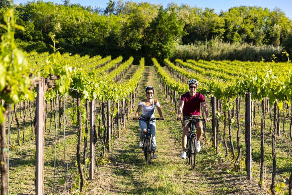 ebike-tour-tra-le-vigne-della-cantina-ottaviani
